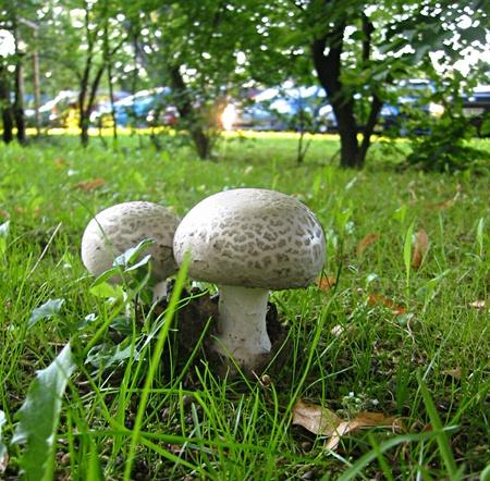 Pilze vorm Haus