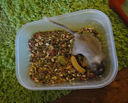 Mäusis auf Freigang, Paul Flory