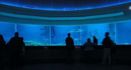 Haifischbecken, Zoo Leipzig