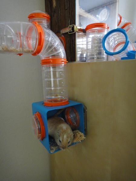 Mäusebalkon