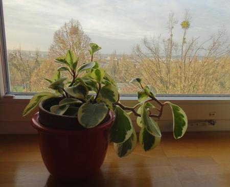 Ullis Pflanze