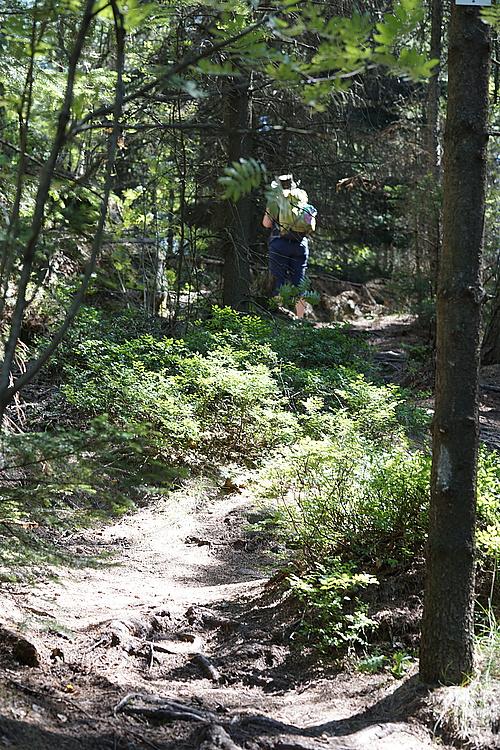 Keine Heidelbeeren im Wald auf dem Töpfer