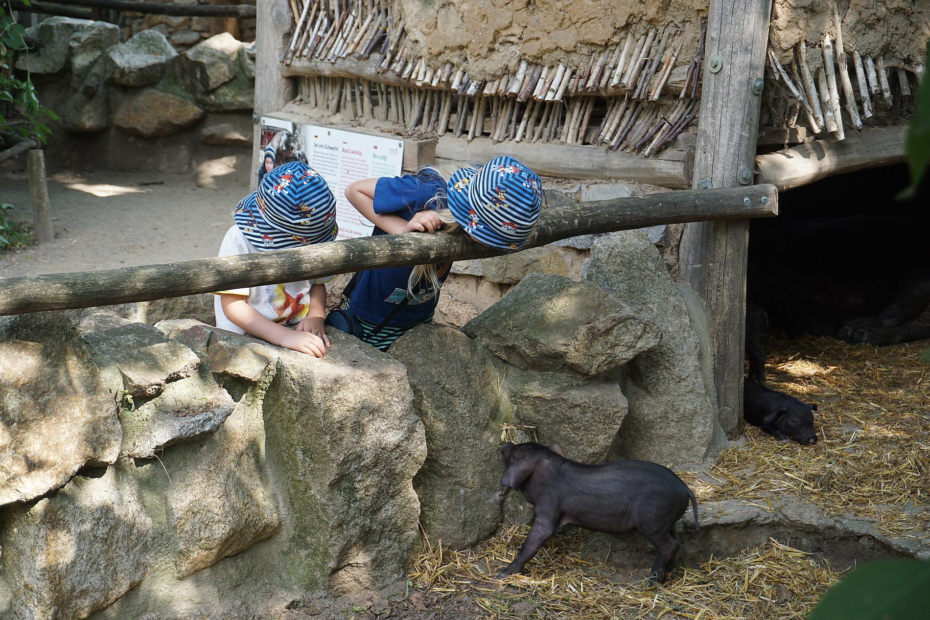 Tibetschwein