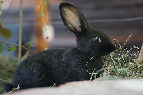 Kaninchen zum streicheln