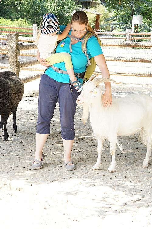 Ziegen streicheln (also Maria und Jannika streicheln die Ziegen...)