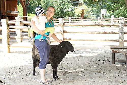 Schafe zum streicheln