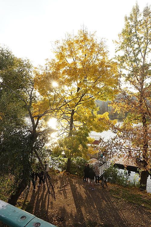 goldene Herbstsonne im Baum an der Moldau in Prag