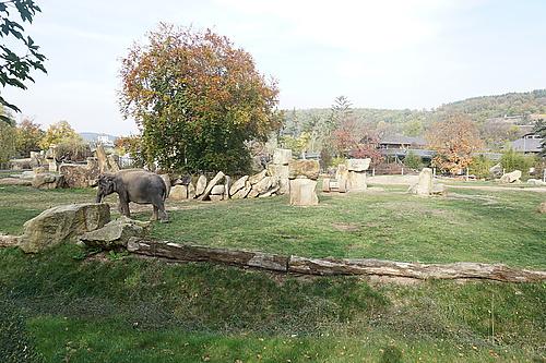 Das Tal der Elefanten, Zoo Prag