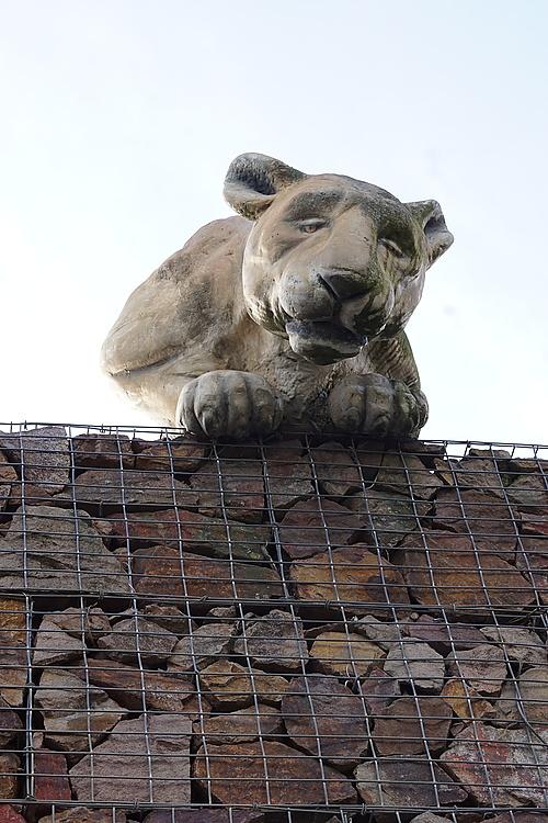 Tiger auf dem Dach, Zoo Prag
