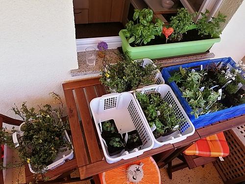 gelieferte Pflanzen aus der Baumschule