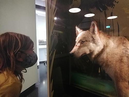Wölfe im Haus der Tausend Teiche