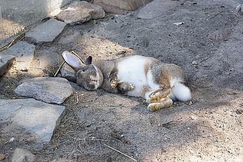 Karnickel im Ziegen- und Wildtierpark Thräna