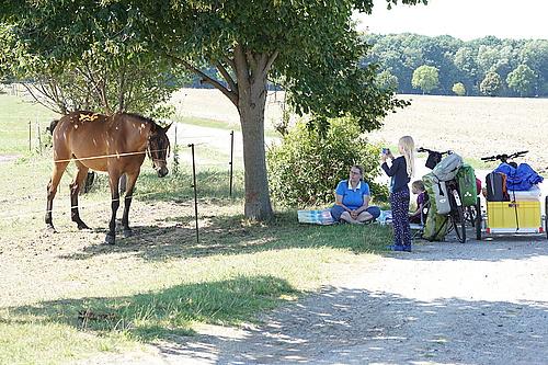 Pferdekoppel in Ralbitz