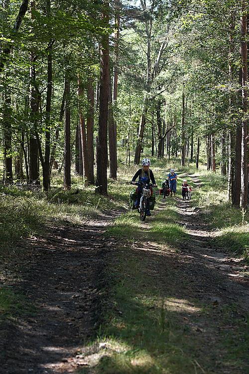 irgendwo im Wald bei Deutschbaselitz