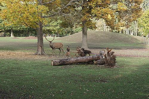 Rothirsch im Wildtierpark Edersee