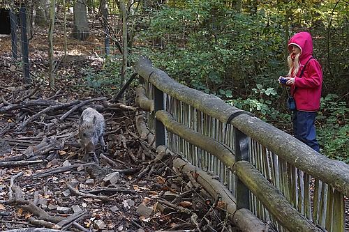 Wildschwein im Wildtierpark Edersee