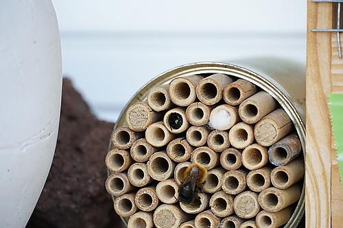 Biene bei Eiablage