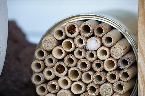 Bienen bei der Eiablage